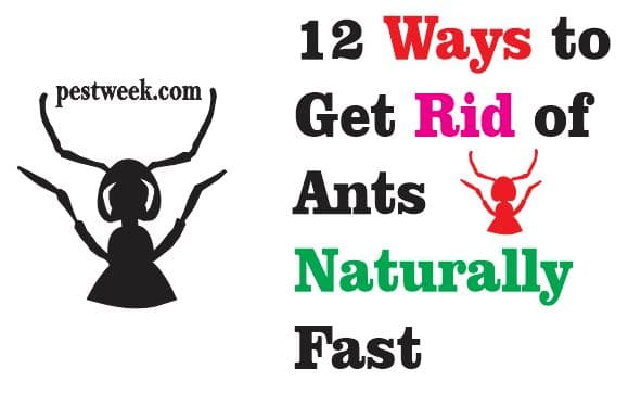 12 Ways to Get Rid of Ants Naturally Fast