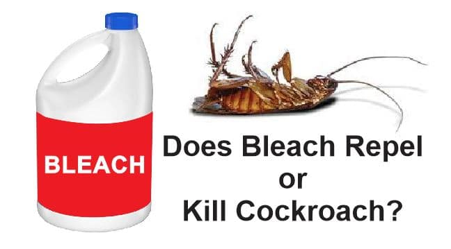 Does Bleach Repel or Kill Cockroach?