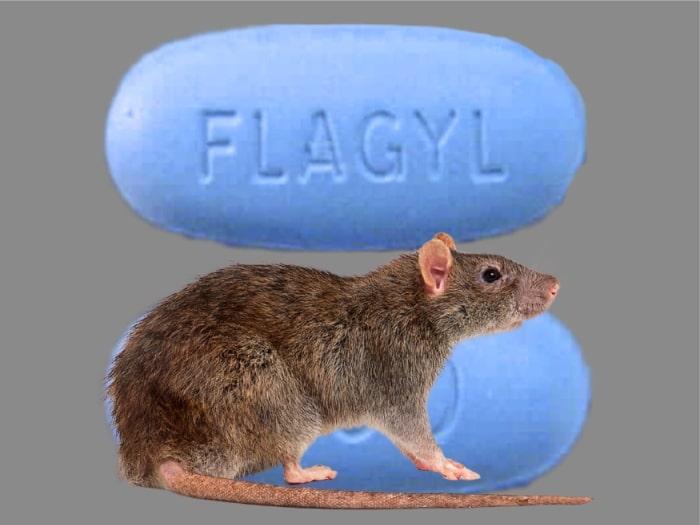 Flagyl Homemade Rat Poison