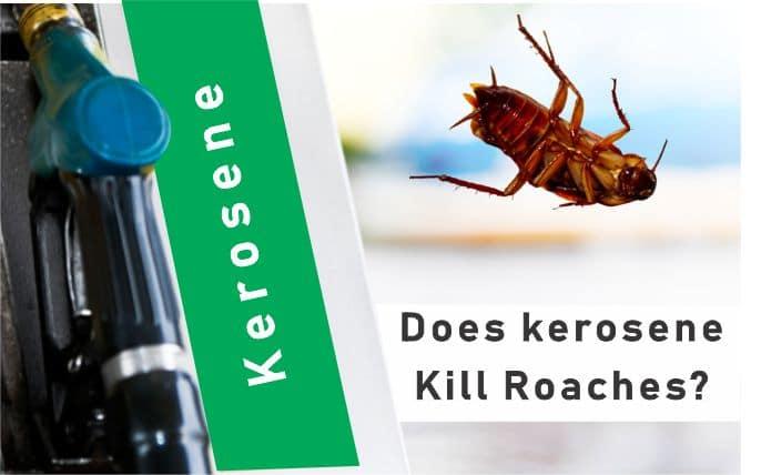 How to Kill Cockroaches with Kerosene