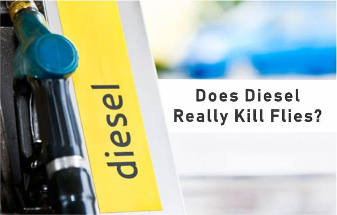 How to kill and repel flies with diesel