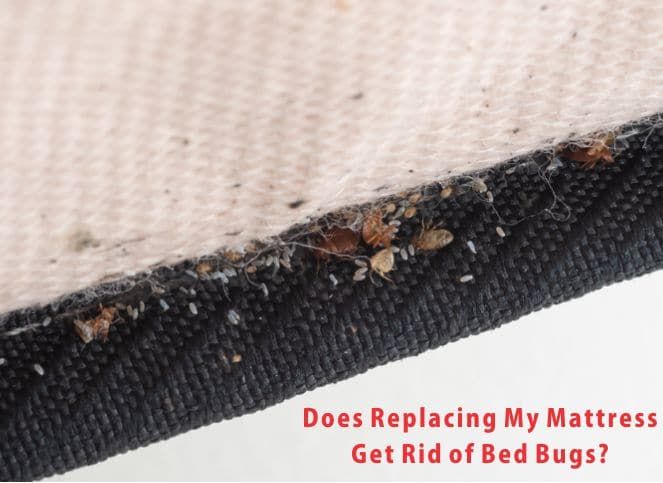 Replacing mattress to get rid of bed bugs