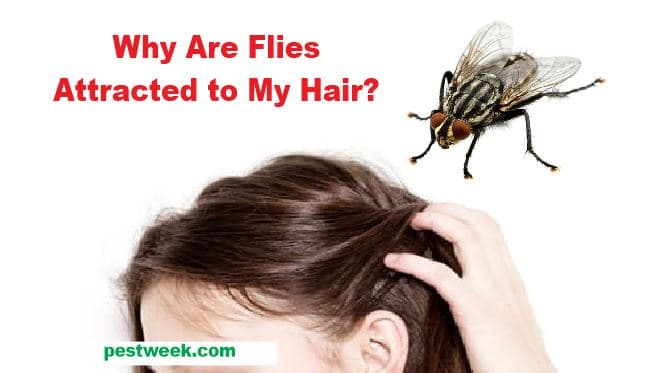 Flies Attracted to My Hair