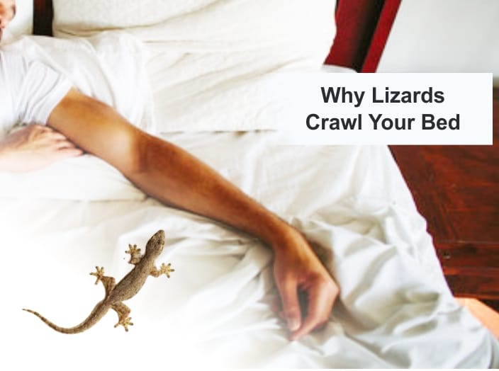 Will Lizards Crawl Your Bed [6 Causes of Lizards in Bed?]