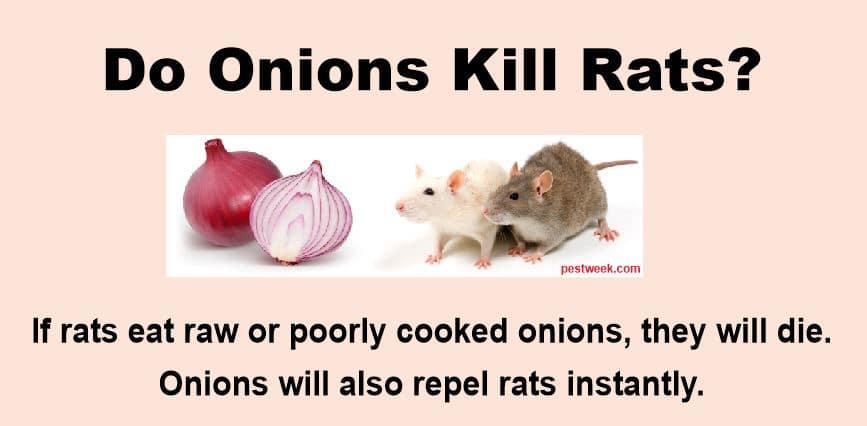 Do onions kill rats?