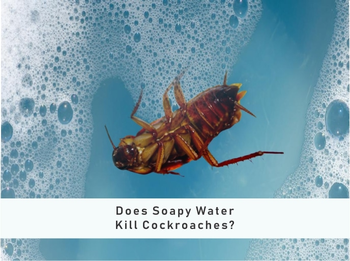 Does Soapy Water Kill Cockroaches Instantly?