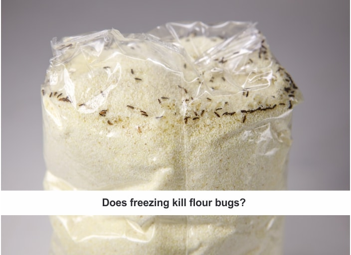 How to get rid of Flour Bugs by Freezing