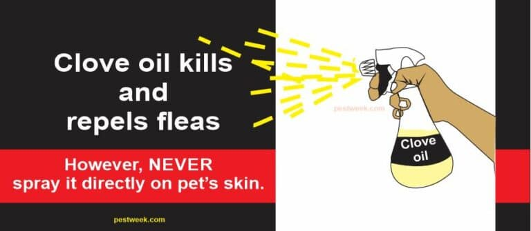 Does Clove Oil Kill Fleas?
