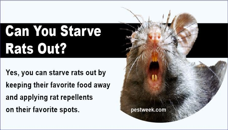Can You Starve Rats Out?