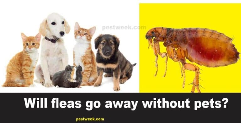 Will Fleas Go Away On Their Own Without Pets