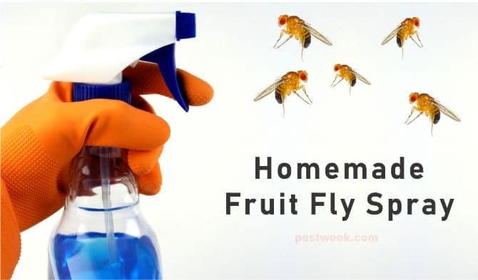 How To Make a Homemade Fruit Fly Spray