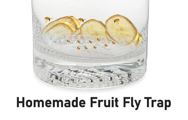 How to Make a Homemade Fruit Fly Trap With Pictures