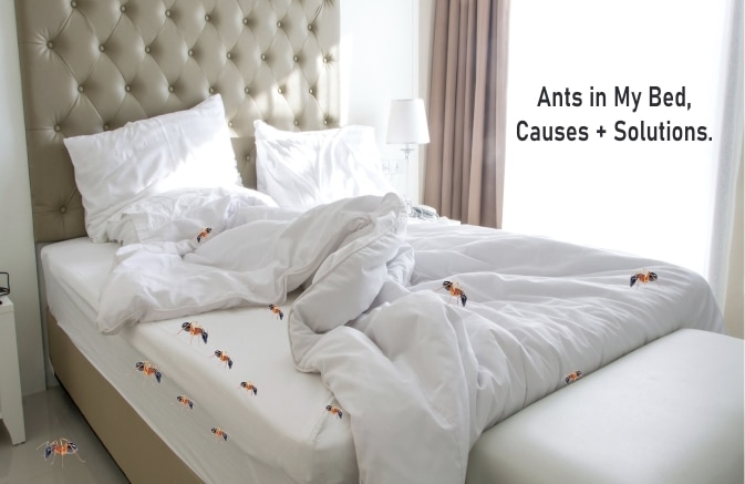 Ants in My Bed Causes + How to Get Rid of Them