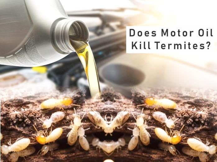 Does Motor Oil Kill Termites?