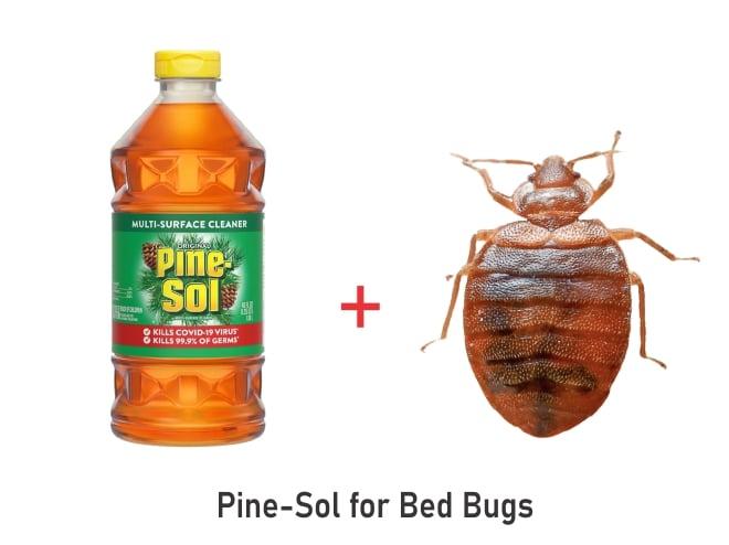 pine sol kill bedbugs
