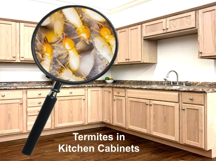 Termites in Kitchen Cabinets