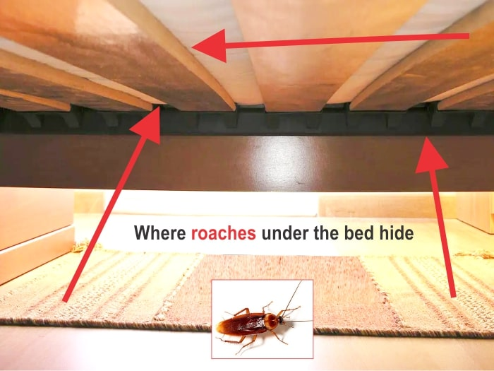 Where cockroaches hide under the bed