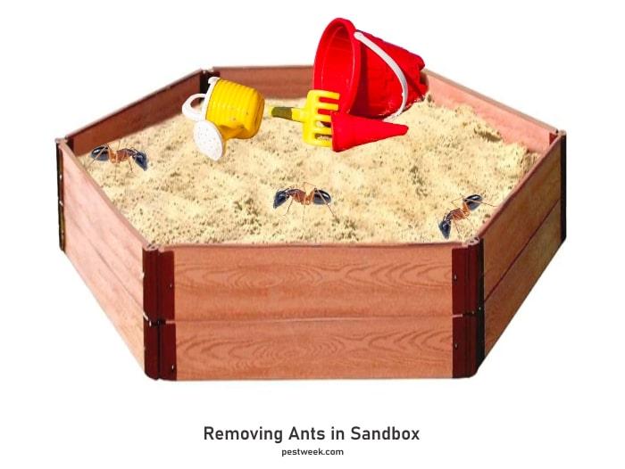 Ants in Sandbox