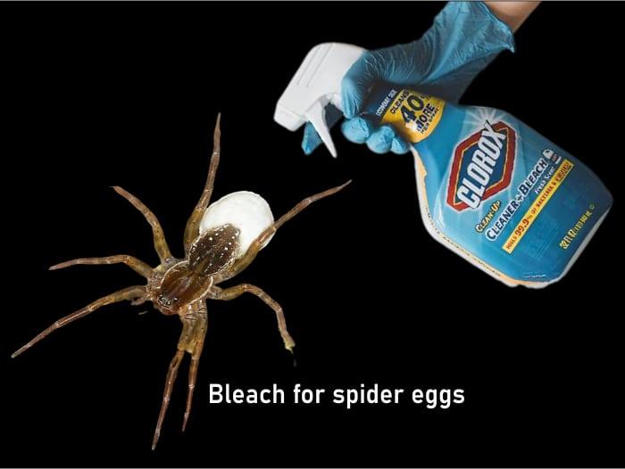 Will bleach kill Spider Eggs?