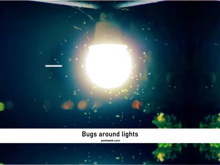Why do Insects Like Light?