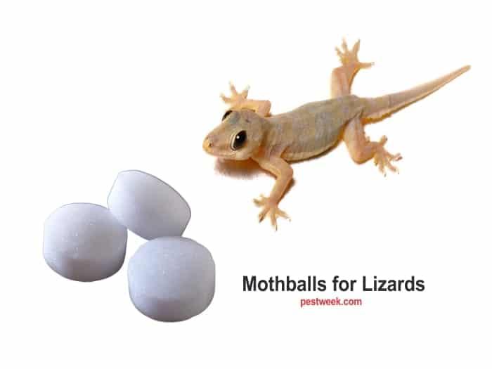 Mothballs for Lizards