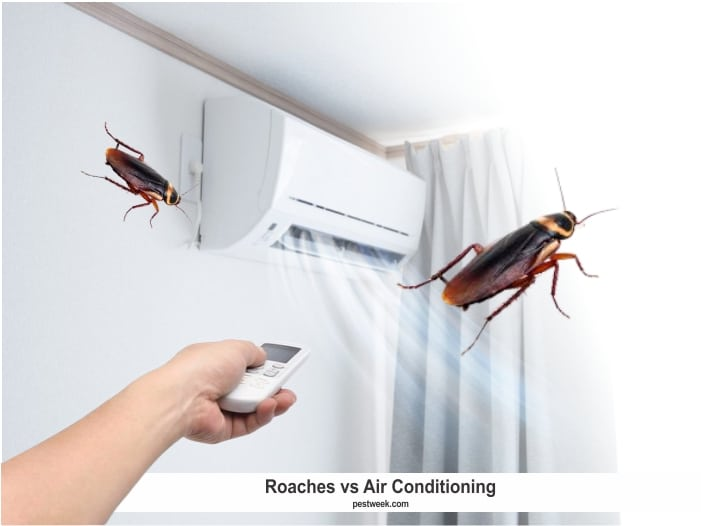 Do Roaches Like Air Conditioning?