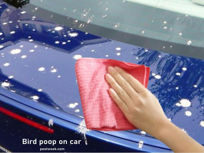 Why birds poop on car and how to remove the droppings