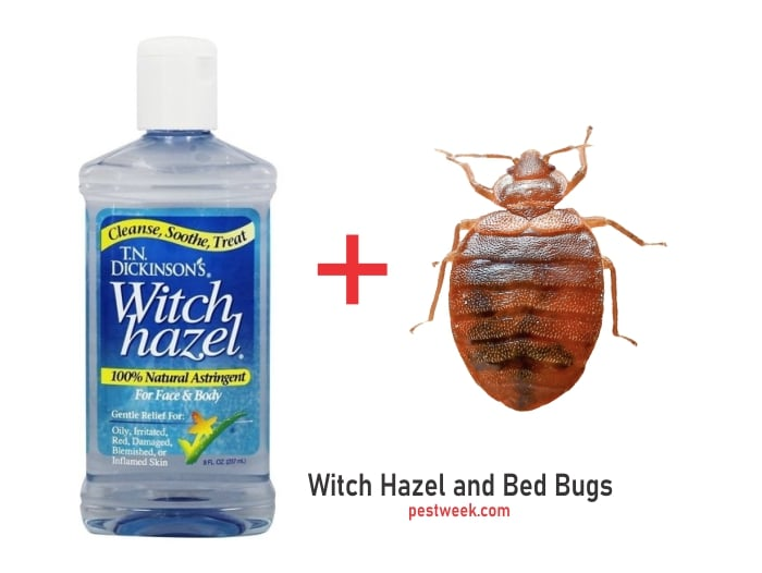 Does Witch hazel kill bed bugs?