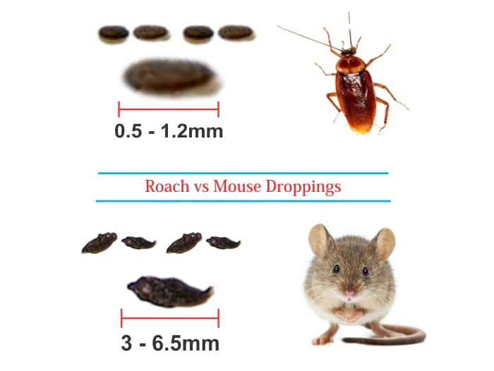 Roach Droppings vs Mouse Droppings