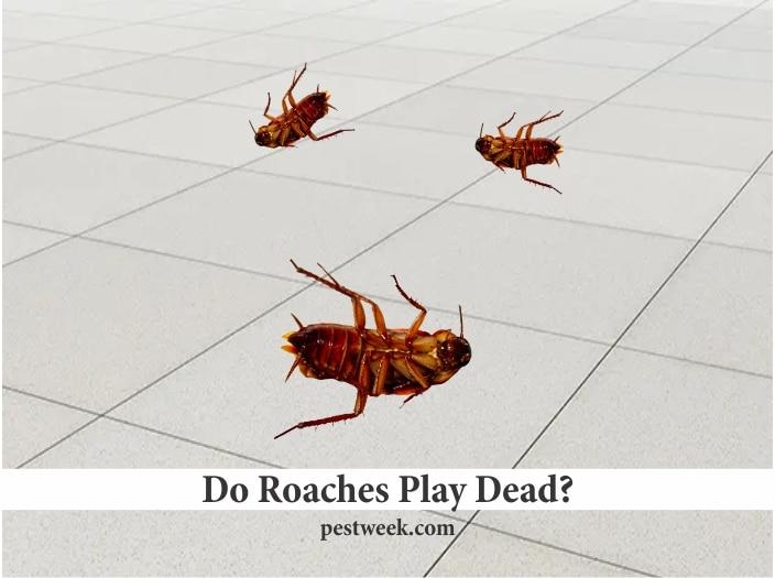 Do Cockroaches Play Dead?