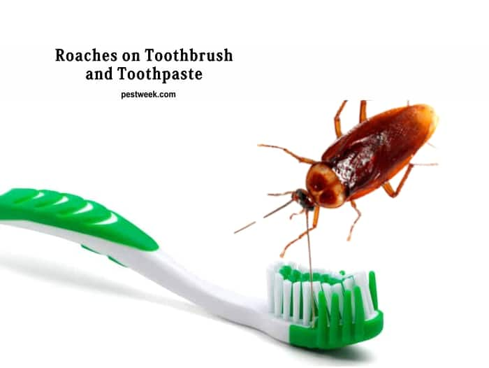 Cockroaches on Toothbrush and Toothpaste