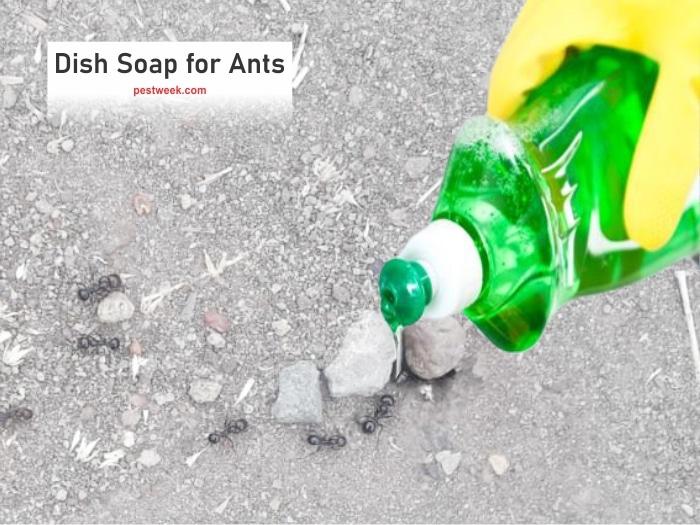 Does Dish Soap Kill Ants?
