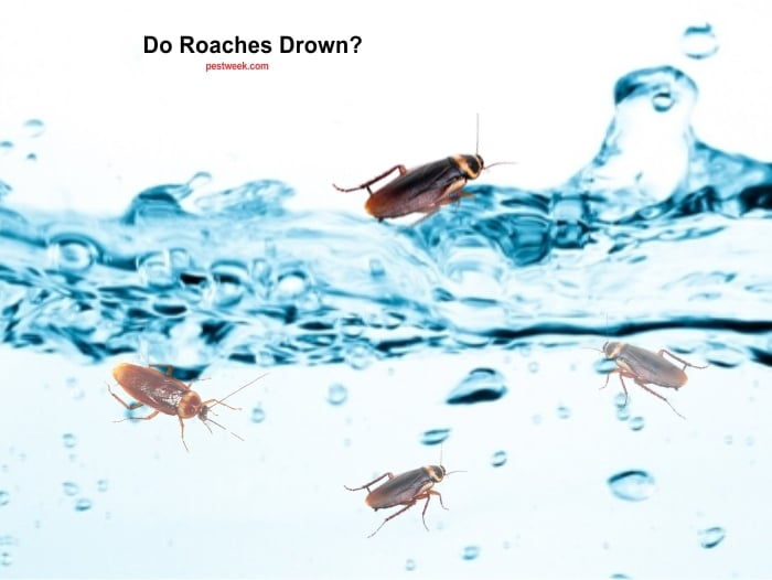 Can roaches drown?