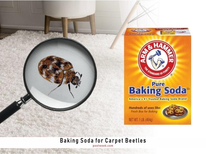 Does Baking Soda Kill Carpet Beetles?