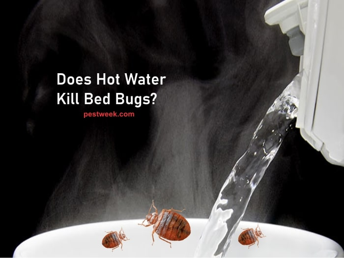 Does Hot Water Kill Bed Bugs?