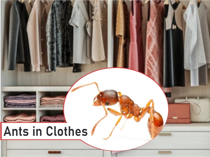 Ants in Clothes