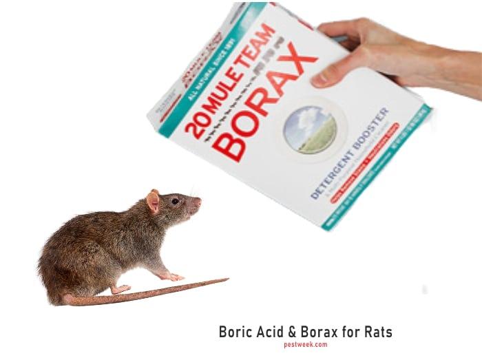 Does Boric Acid Kill Rats?