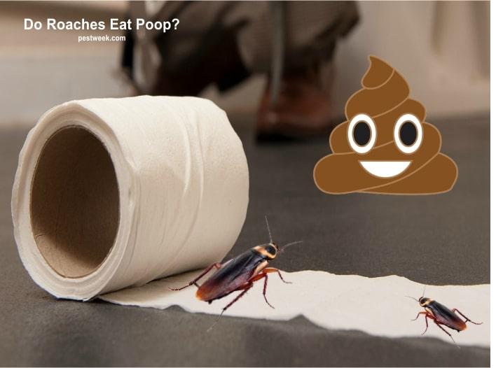 Do Cockroaches Eat Poop?