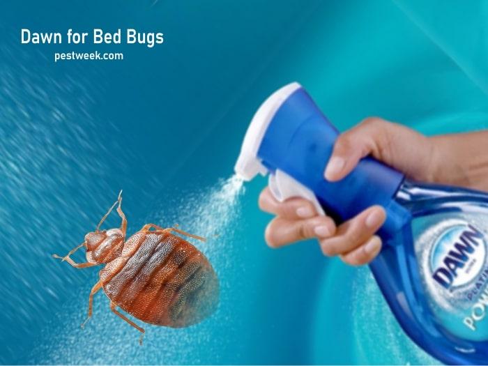 Does Dawn Dish Soap Kill Bed Bugs?