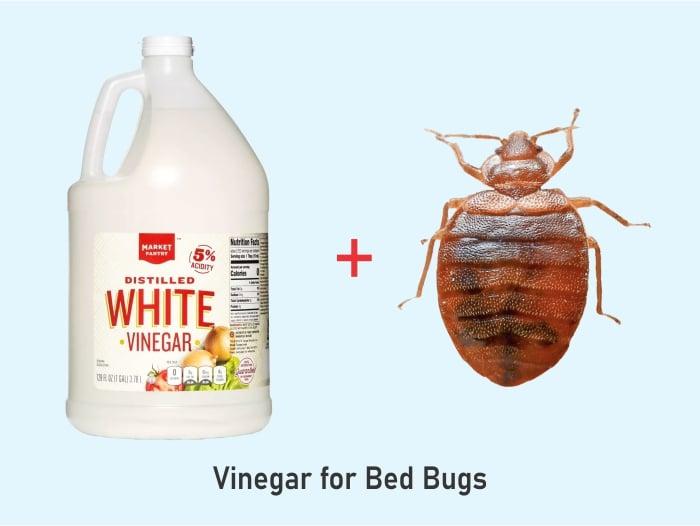 What Kind of Vinegar Kills Bed Bugs?