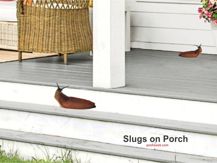How to Get Rid of Slugs on Porch
